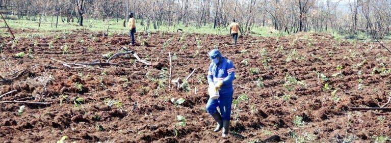 Área atingida por incêndio no Parque Pinheirinho recebe mil mudas de plantas nativas